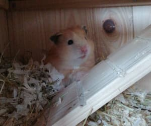 hamster, teddy, and tier image