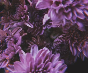 aesthetic, feed, and flower image