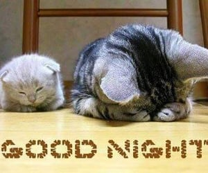 cats, good night, and night image