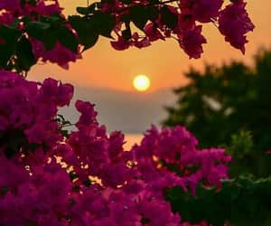 flowers and sunset image