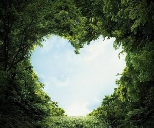 heart, green, and nature image