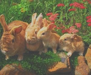 animal, rocks, and tumblr image
