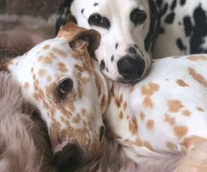 dog, animals, and pet image