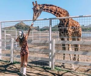 animal, giraffe, and girl image