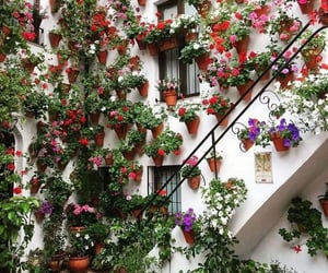 flowers, nature, and home image