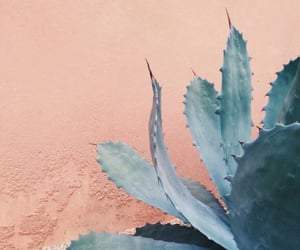 plants, cactus, and pink image