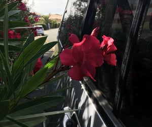 beach, car, and pink flower image
