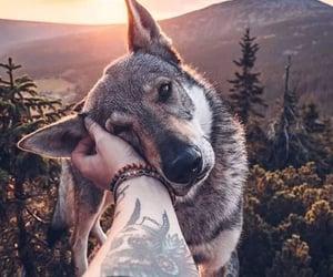 amor, lobo, and atardecer image