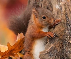 nature and squirrel image