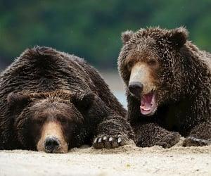 Animales, naturaleza, and oso image