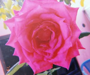 flor, pink, and rosa image