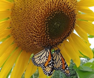 aesthetic, butterflies, and butterfly image