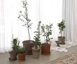 plants, interior, and aesthetic image
