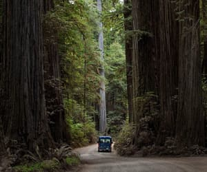 california, camping, and forest image