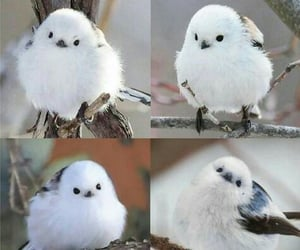 beautiful, wildlife, and birds image