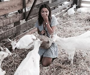 fashion, animals, and girl image