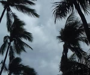 clouds, summer, and palm trees image