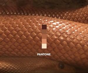 pantone, snake, and theme image