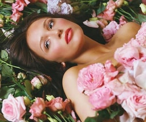 photoshoot, roses, and pink image