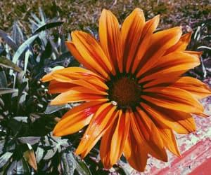 art, naturaleza, and primavera image
