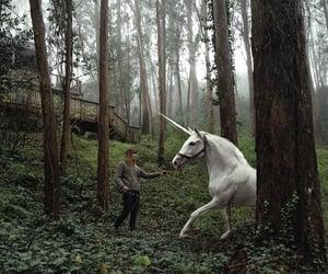 unicorn, forest, and magic image