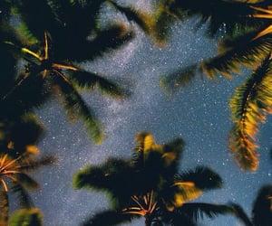 palms, night, and sky image