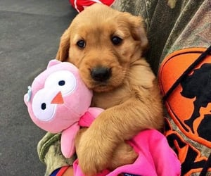 adorable, puppy, and stuffed toy image