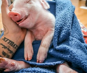 Animales, pig, and vegan image