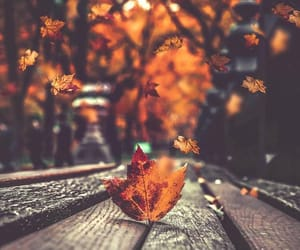 autumn, September, and fall inspiration image