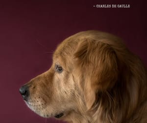 animals, quotes, and dogs image