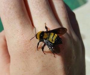 bee, aesthetic, and animal image