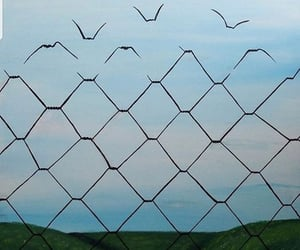 birds, freedom, and fence image