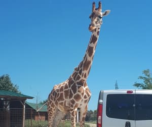 zoosafari, animal, and animals image