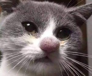 Animales, cat, and feline image