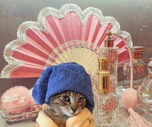 cat and perfume image
