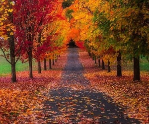 autumn, nature, and style image