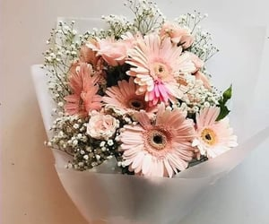 flowers, pink flowers, and flowers lovers image