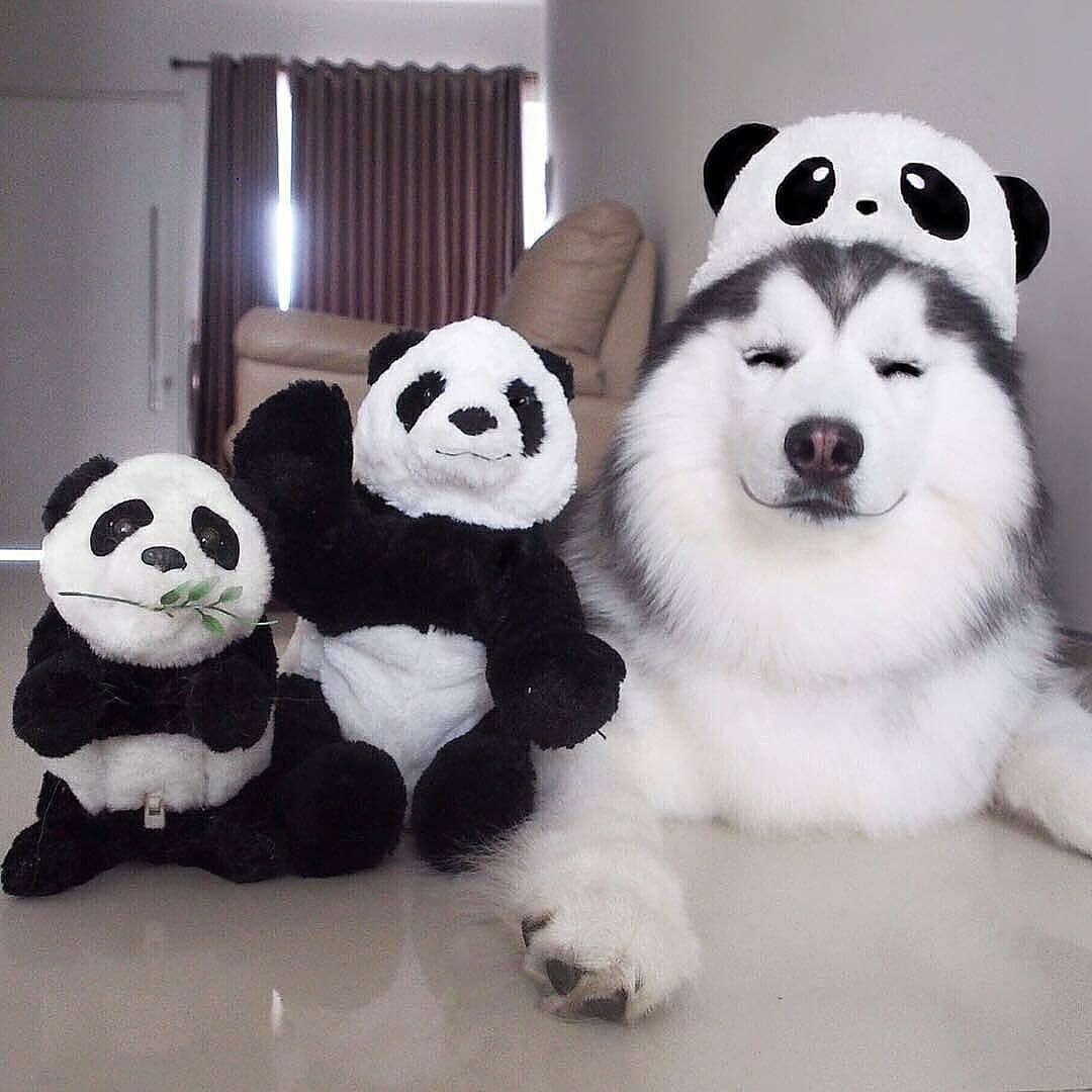 dog, panda, and cute image