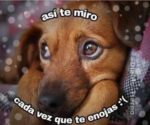 lindo, perrito, and uwü image
