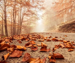 autumn and fog image
