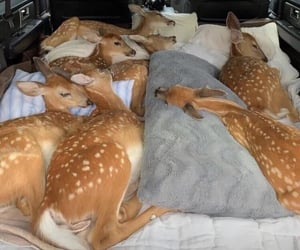 adorable, deers, and sweet image