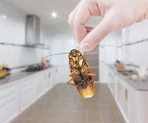 cockroach, control, and pest image