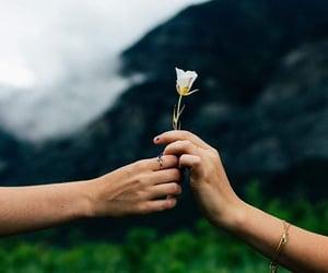 amor, flor, and frase image