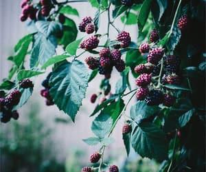 berries, blackberries, and garden image