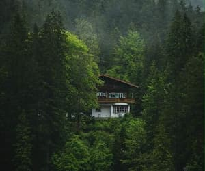 architecture, forest, and home image