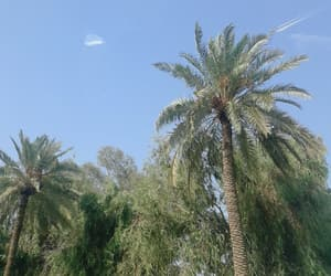 baghdad, blue, and palms image