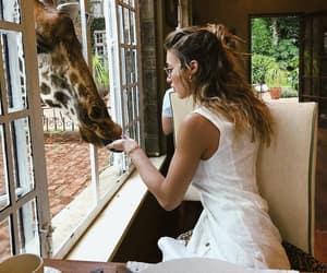 animal, food, and giraffe image