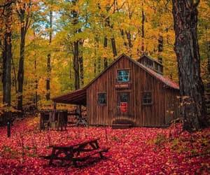 autumn, beautiful, and coffee image