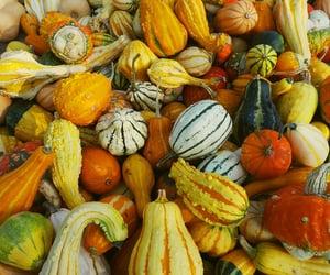 autumn, colourful, and fall image