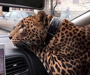 animals, beautiful, and style image